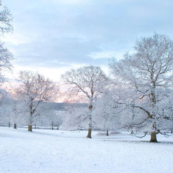 Arnold arboretum Winter